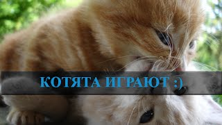 Домашние котята видео. Котята играют. Наши найдёныши :)