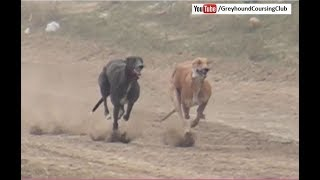 Dogs running | Track race 10-11-12 February 2018 #5 | Greyhound race 2018