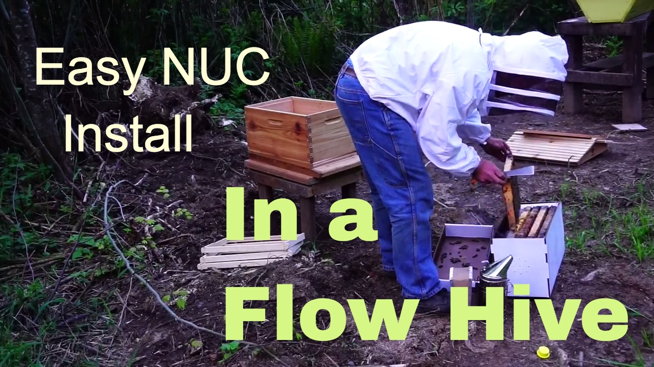 Homestead Beekeeping  Installing A Nuc In A Flow Hive