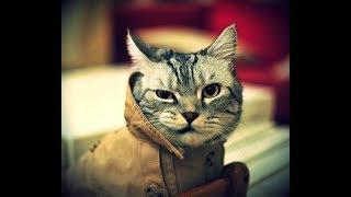 Приколы про Животных до Слез - Coub Звери #67