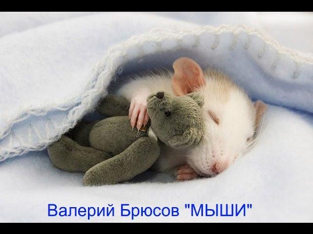 Изображение предпросмотра прочтения – ВиолеттаНаумчук читает произведение «Мыши (В нашем доме мыши поселились…)» В.Я.Брюсова