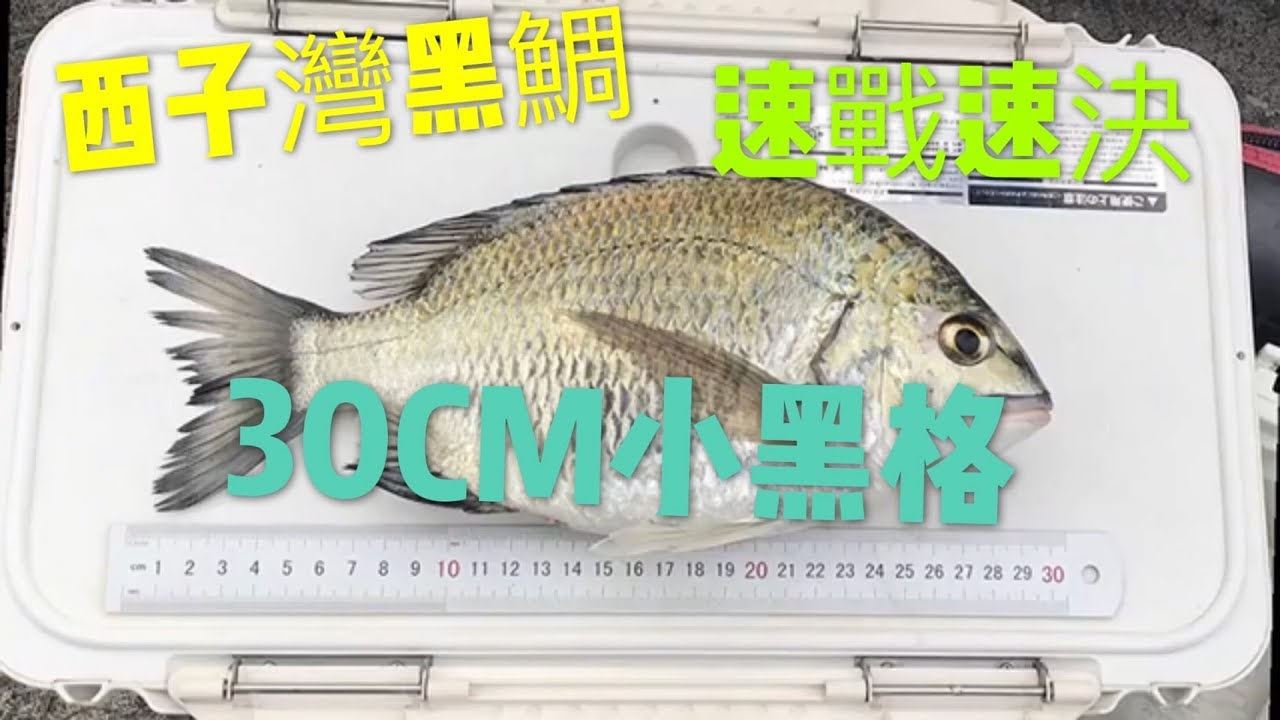 2018/12/17 磯釣 西子灣黑格 30CM - YouTube