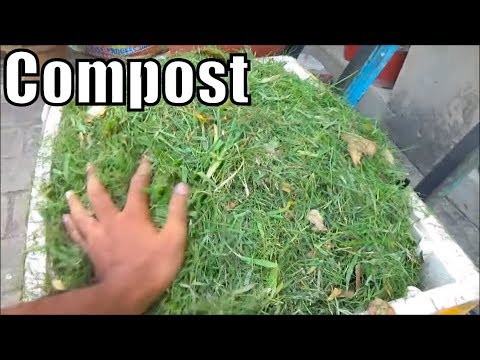 Grass Clippings Compost Vegetable Garden | Homemade Grass Fertilizer (Urdu/Hindi)