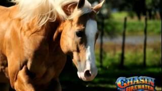 JB Quarter Horse Stallions