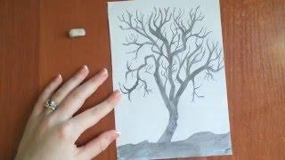 Как нарисовать дерево карандашом? (How to draw a tree in pencil?)(Здравствуйте, в данном видео вы увидите как нарисовать дерево простым карандашом. В дальнейшем на нашем..., 2015-12-27T12:58:29.000Z)