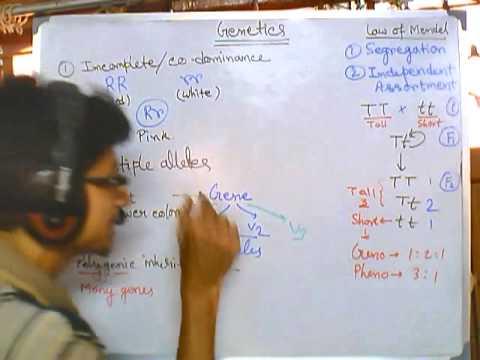 Genetics part 2 nonmendelian inheritance (codominance, polygene, linked gene, sex linkage etc.)
