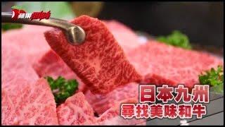 日本和牛的來頭