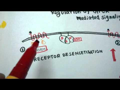 GPCR regulation