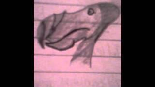 How to draw a dodo pt1
