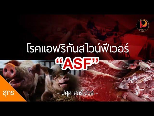 รู้ทัน ป้องกันโรคแอฟริกันสไวน์ฟีเวอร์ (ASF) โดยกรมปศุสัตว์ กระทรวงเกษตรและสหกรณ์ - ปศุศาสตร์ นิวส์
