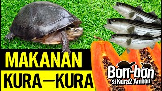 Makanan Kura-kura Ambon