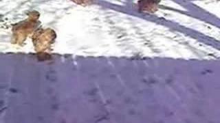 Baixar Snow Puppies