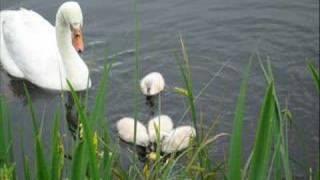 Lormes--à l'étang du Goulot
