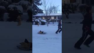 Child Pulls Chickens On A Sled In Portland Snow