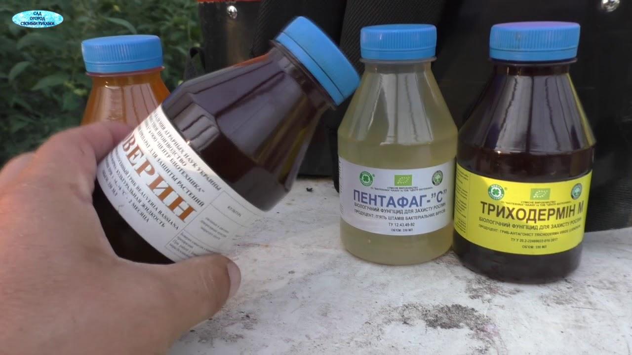 Биологическая защита от вредителей и болезней!