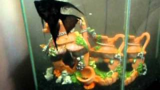 New Free Corner Fish Tank And Bedroom With Headboard & New Lamps 003.avi