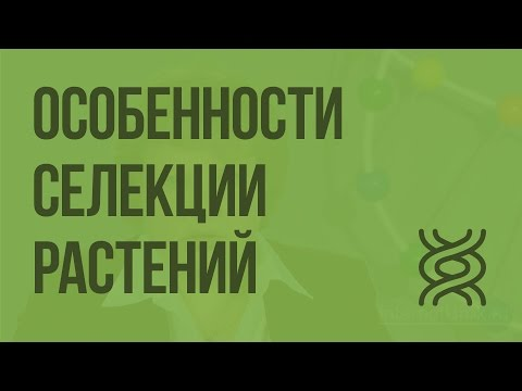 Особенности селекции растений видеоурок