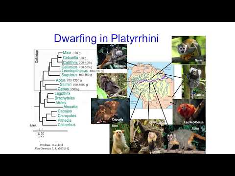 Biodiversity in the context of DEB theory