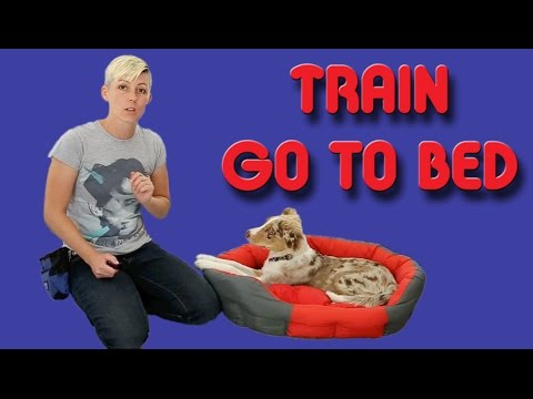 The EASIEST way to train your puppy to go to his bed – Dog training