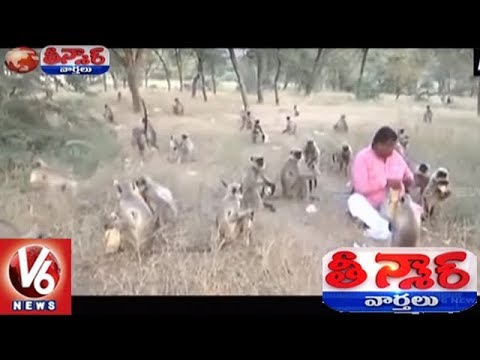 Gujarat Man Exhibits Love For Monkeys By Feeding Them 1700 Chapatis Every Week | Teenmaar News