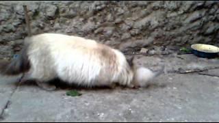 Кошка Милана отдала на воспитание котенка собаке