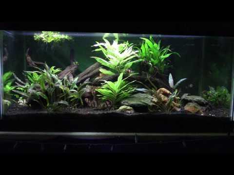 Aquarium Lighting; Color Temperature and Color rendering