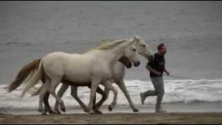 Horses at Liberty thumbnail