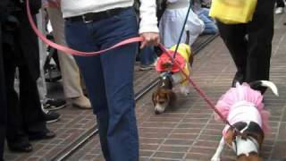Mutti Gras Pet Parade