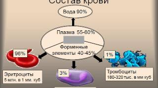 Презентация Кровь и кровообращение  Подготовка к ЕГЭ