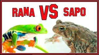 La Diferencia Entre Ranas y Sapos.