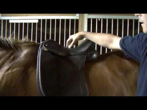 Saddle Fitting in 9 Steps – Step 1 – Balance – by Schleese Saddlery Service
