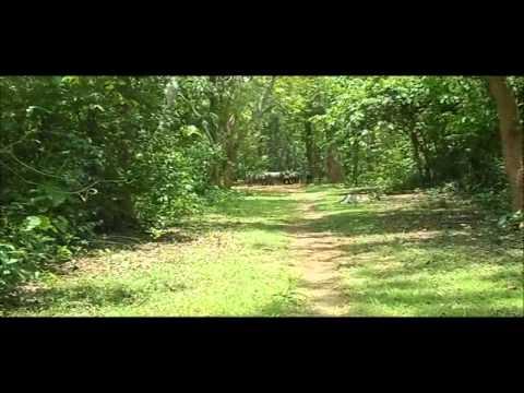 Panchalingeswar, Nilgiri, Chandipur, Kuldiha Forest, Devkund in Orissa. - Part 21
