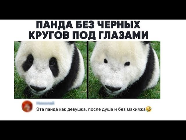 Лютые приколы. Панда забыла накрасить глаза