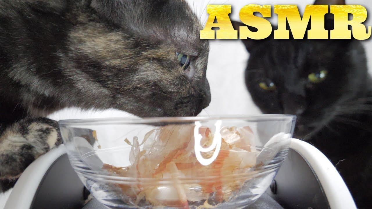 【ASMR】耳元でかつおぶしを食べる猫の咀嚼音🐈🎧