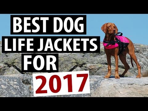 Best Dog Life Jacket Models for 2017
