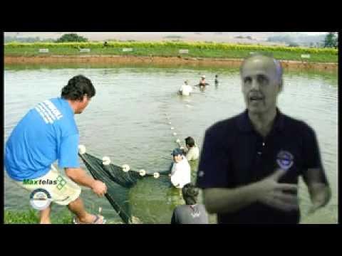Maxtelas - Cultivo de Peixes em Tanque Rede Ep 01.avi