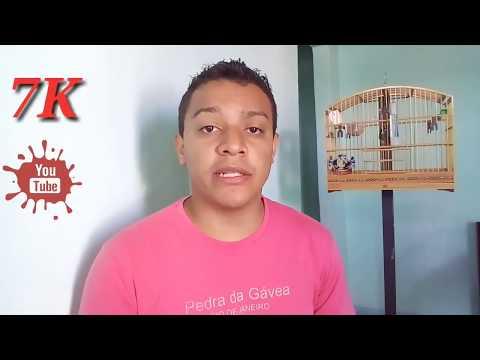 DICAS E MANEJOS DE COMO FORNECER CÁLCIO PARA COLEIRO E PAPA-CAPIM