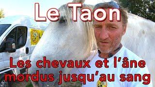 Le Taon - Les tutos d'Etienne # 6