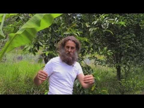From Grasslands to Permaculture Food Forest Paradise in Noosa Australia