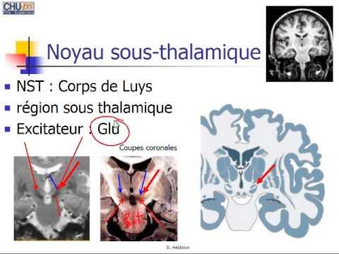 Dr Hasboun: Noyaux Gris Centraux