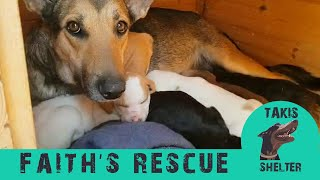 Aggressive dog turns sweetheart and thanks her rescuer by adopting puppies -  Faith - Takis Shelter