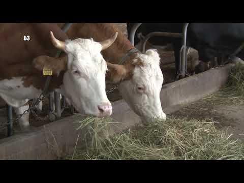 Rezultat slika za Na Pešteri za većinu domaćinstava osnovni izvor prihoda je stočarstvo