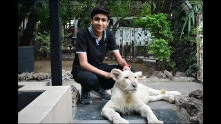 GORI t he white lion (Exotic Animals)