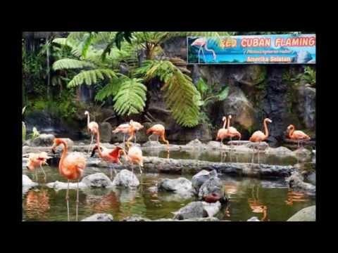 batu-secret-zoo---jawa-timur-|-tempat-wisata-di-indonesia