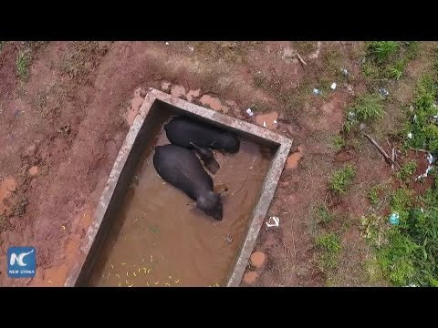 Wild elephants rescued from reservoir in SW China