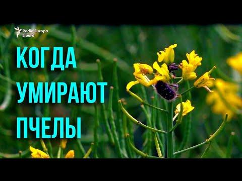 Pur și Simplu: Массовая гибель пчел в Молдове