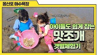 몽산포해수욕장 맛조개 갯벌체험 + 맛조개 칼국수