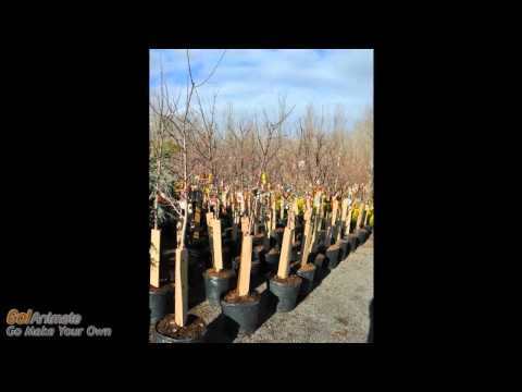 Fruit Trees At Highland Hill Farm