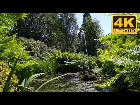 4K Garden Video of a Fountain in a Pond with Lush Greenery