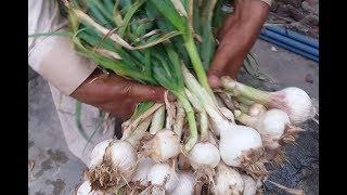 Decent Garlic Harvest | Organic Terrace Garden | May 11, 2018 Update | Garlic in Cement Bags | EP 16
